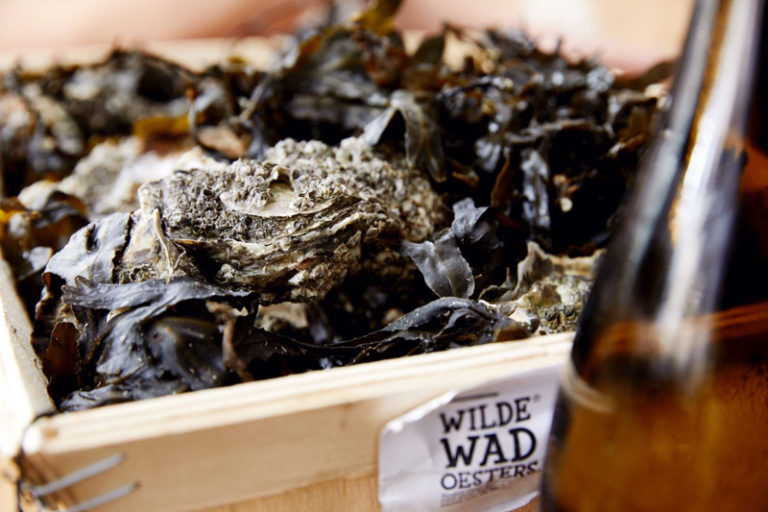 The wild oysters from the Wadden Sea